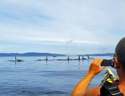 Paddle into the Wild on Northern Vancouver Island, British Columbia with Ecosummer Expeditions.