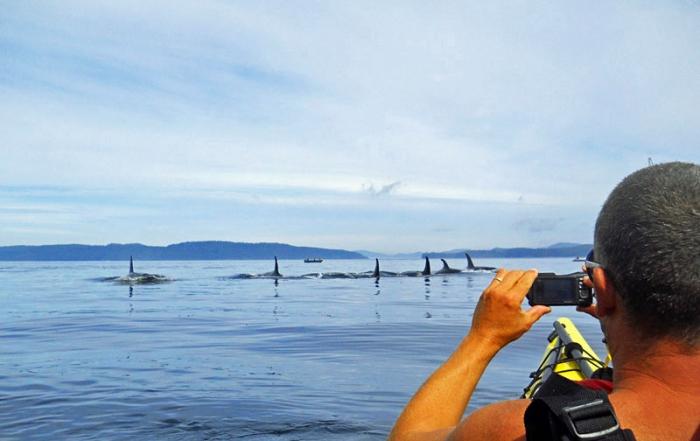 ecosummer-orca-shot-kayaking-vancouver-island-british-columbia