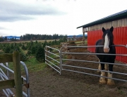 Jingle-Bell-Tree-Farm, Victoria, British Columbia, photo-by-Donald-Lovegrove