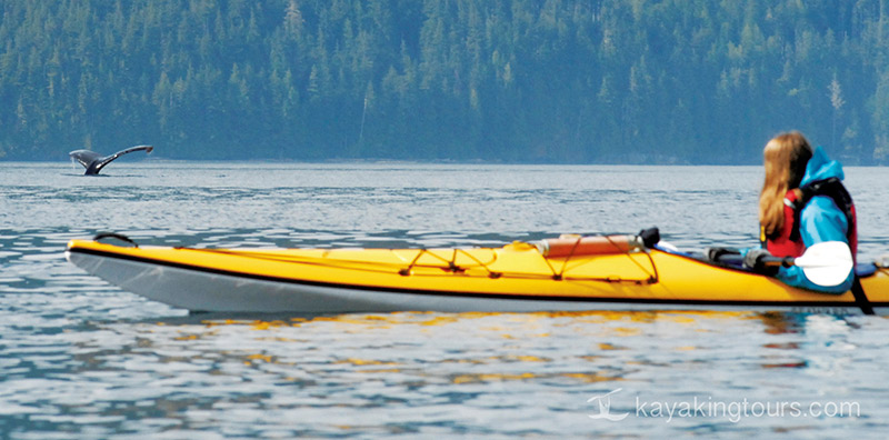 Humpback Whale and Kayaker, Spirit of the West Adventures kayaking expeditions to Johnstone Strait and Broughton Archipelago, British Columbia, Canada