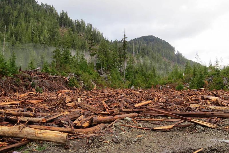 Why Vancouver Island's Walbran Valley rainforest matters: British Columbia, Canada. Worksite in the Walbran Valley, Torrance Coste, Sierra Club BC
