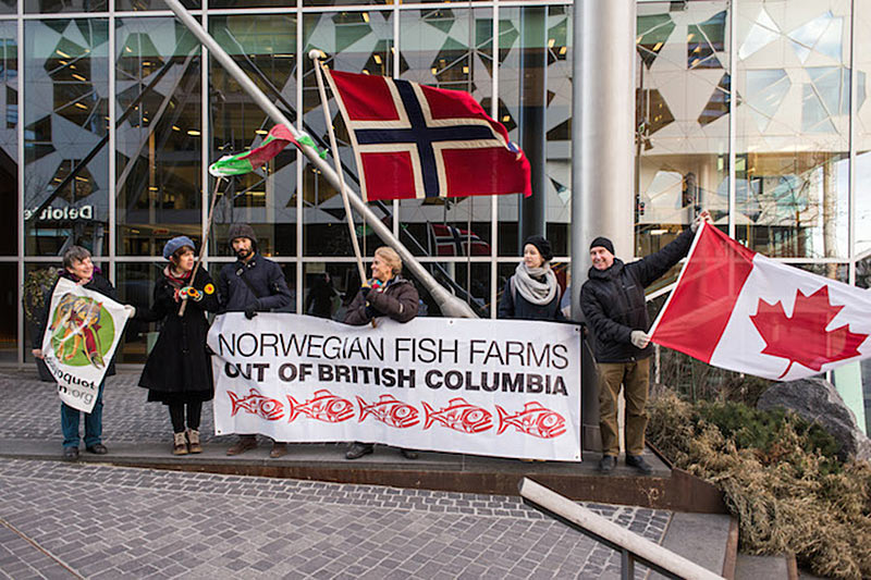 Open-net Salmon Farms ending in Norway but OK for BC? Clayoquot Action Tofino creating awareness in Norway.