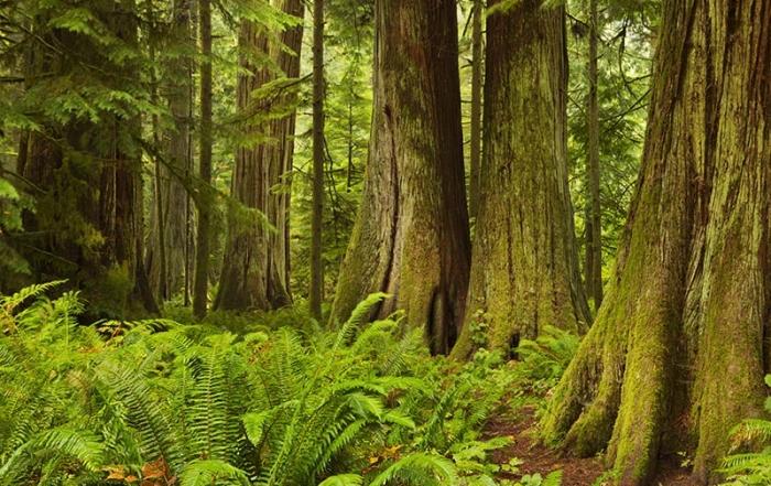 Cathedral Grove, MacMillan Provincial Park, Vancouver Island, British Columbia. Photo: BritishColumbia.com