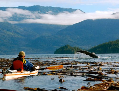 Northern Vancouver Island Tourism Operators Create Conservation Fund