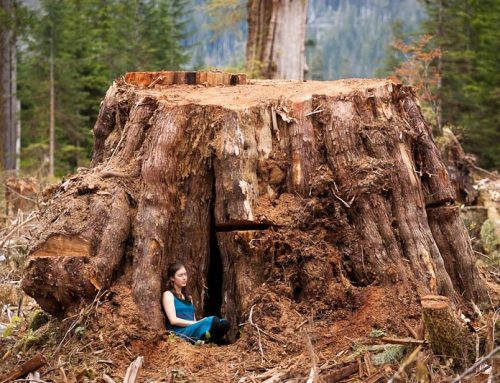 See what's going down in BC's Ancient Forests