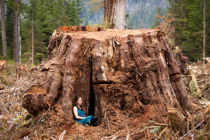 See What S Going Down In Bc S Ancient Forests Vancouver