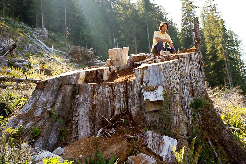 Ancient Forest Alliance, Vancouver Island, British Columbia: Giant Redcedar Stump, Walbran Valley