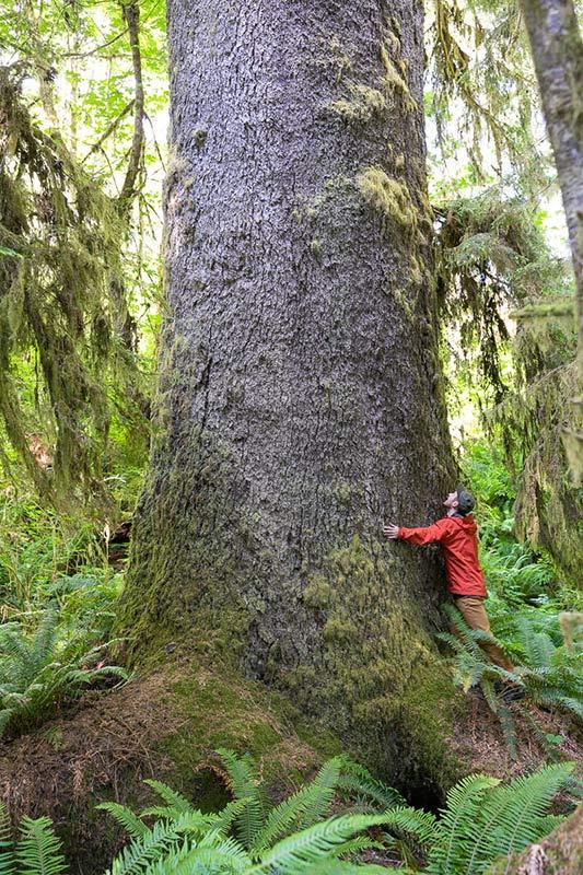 Mossome Grove, Port Renfrew, Vancouver Island, British Columbia, Canada