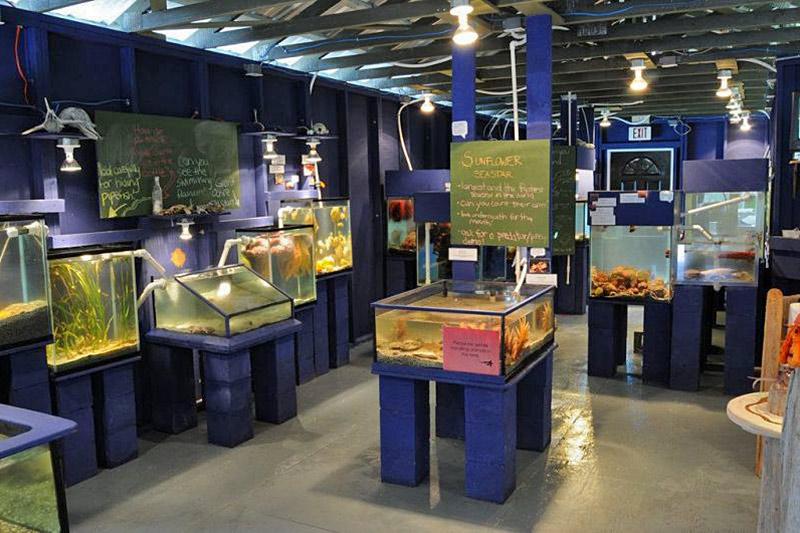 Ucluelet Aquarium, Ucluelet, Vancouver Island, British Columbia