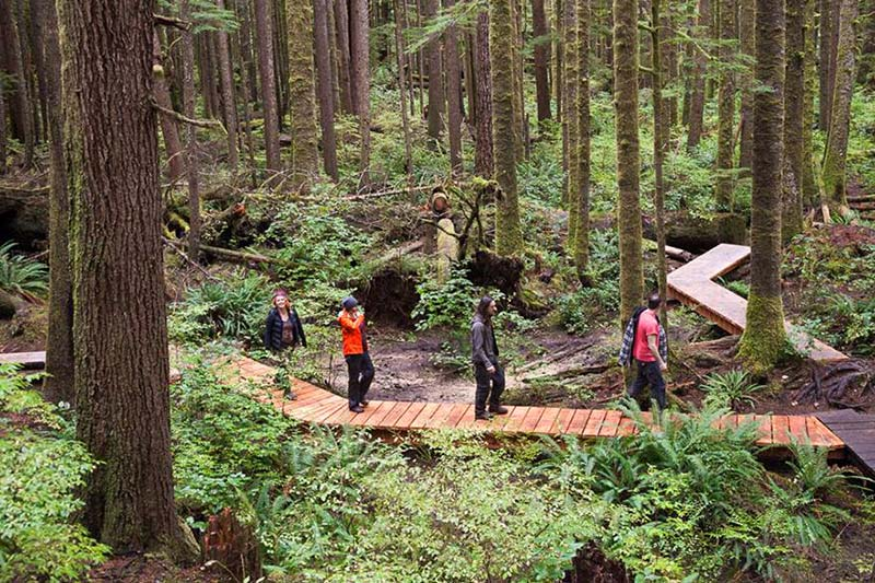 Doing the Boardwalk at Avatar Grove in Port Renfrew, Vancouver Island, British Columbia