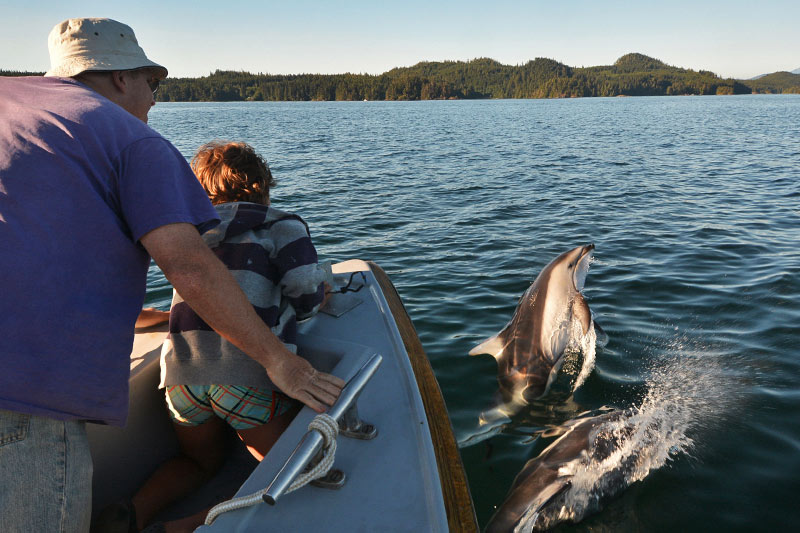 Bow-riding porpoises: Orca Dreams offers kayaking, whale watching and luxury camping on Compton Island, Blackney Pass, British Columbia