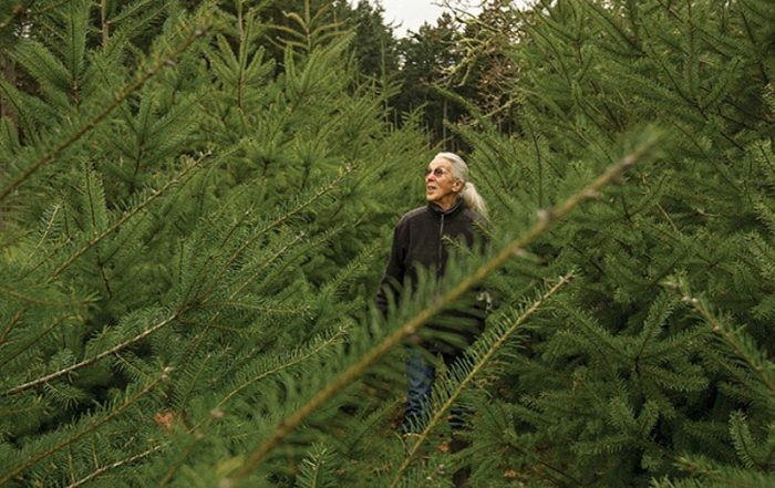 Cut your Christmas Tree the old-fashioned way at Wintercreek U-Cut Christmas Tree Farm, Metchosin, Victoria, Vancouver Island, British Columbia