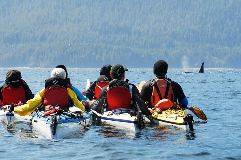 Whales, Wilderness and Glamping in British Columbia with Spirit of the West Adventures