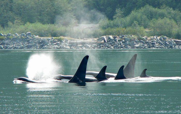 Wildcoast Adventures Kayak Tours & Vacations, British Columbia