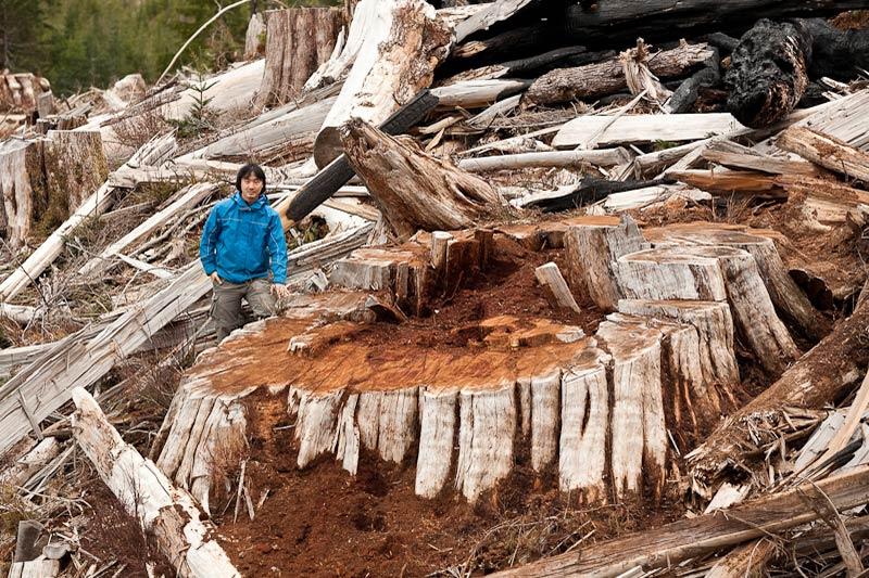 Ancient Forest Alliance, Vancouver Island, British Columbia: Giant Redcedar Stump, Bugaboo Creek, Gordon River Valley