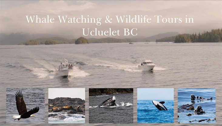 Cameron Ocean Adventures, Whale Watching and Fishing in Ucluelet, Vancouver Island, British Columbia