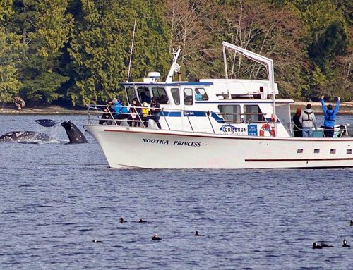 Whale Watching and Fishing in Ucluelet, BC
